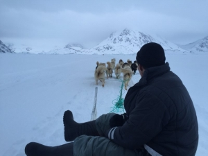 Off on the dog sleds to Kuummiit